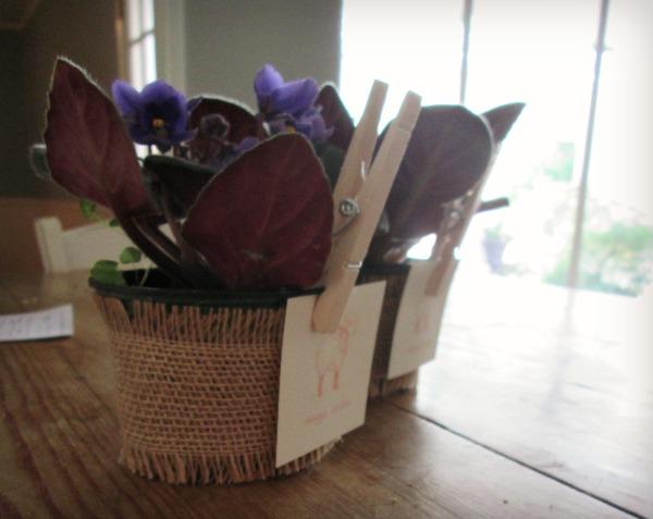 final purple plant