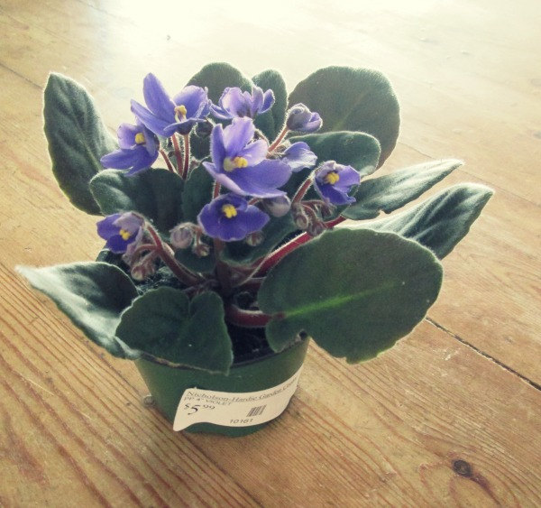 purple plant with tag