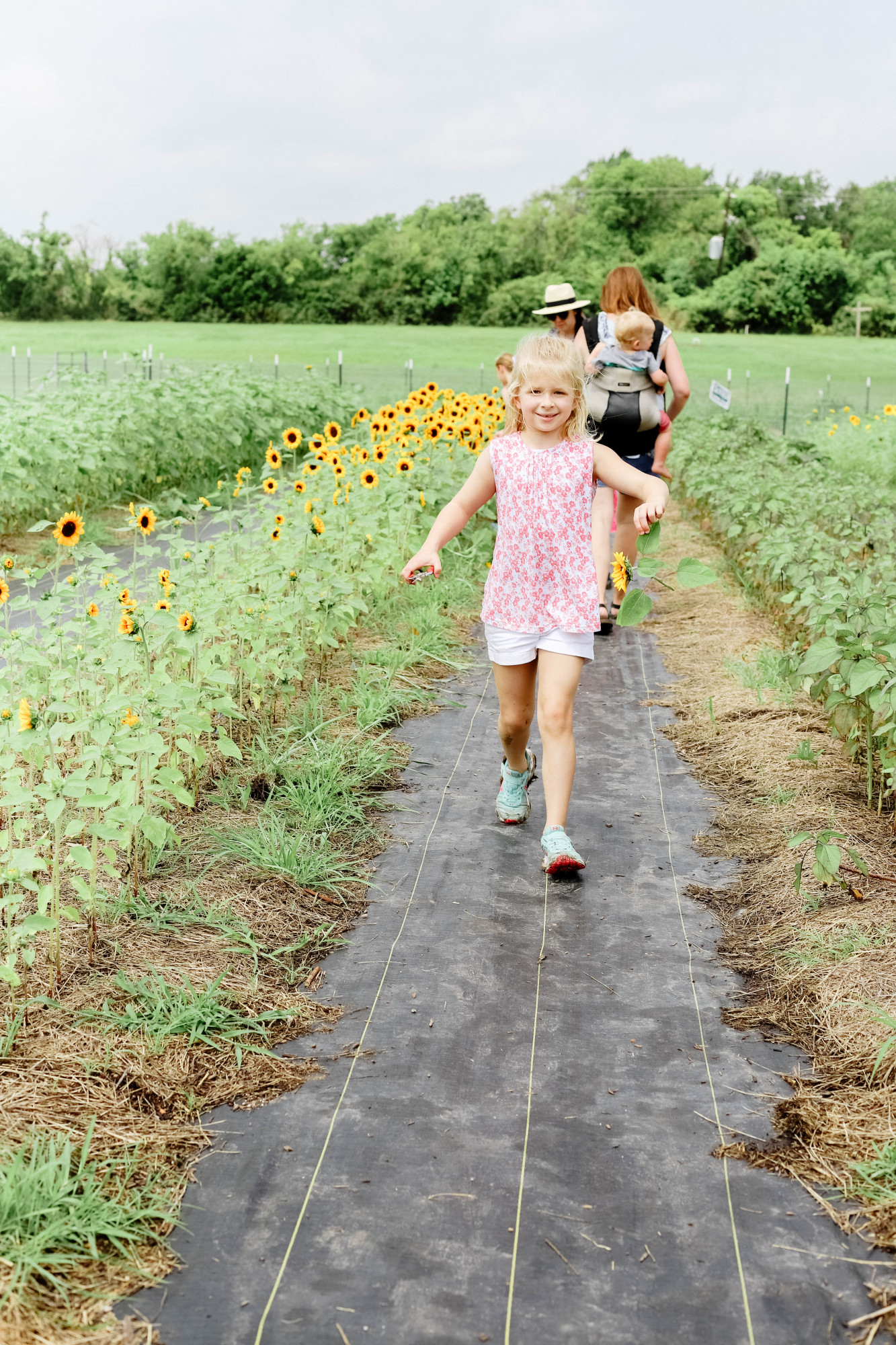 mars hill farm